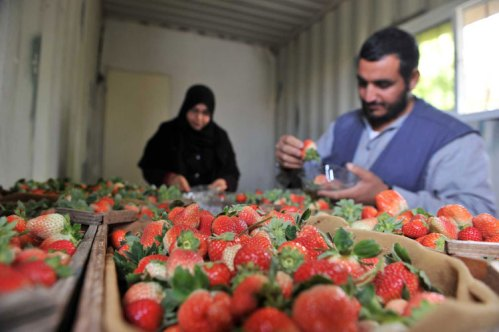 Gazan Unemployment falls to lowest rate